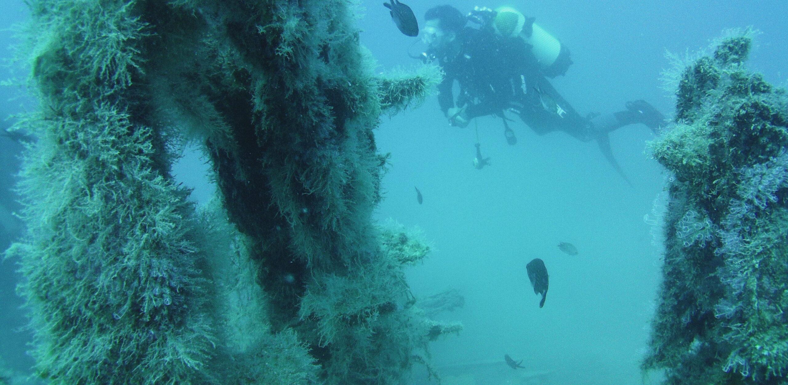 Inmersiones de buceo profundas