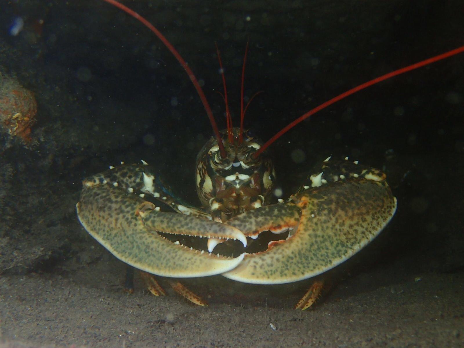 Animales subacuáticos inmersión de buceo