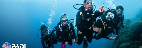 PROFESSIONAL PADI COURSES